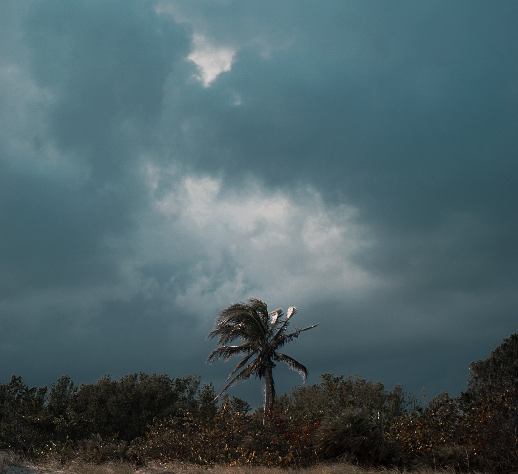image of a dark, cloud filled sky with a palm tree in the distance