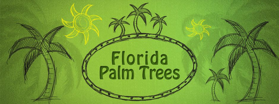 Sketch of Florida palm trees