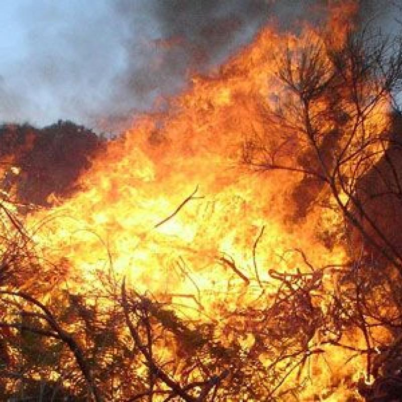 Wildfires can strike Florida anytime during wildfire season